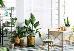 These 6 plants will keep your home cool this summer