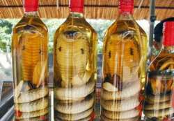 snake wine sip to improve eye sight hair gain sex life