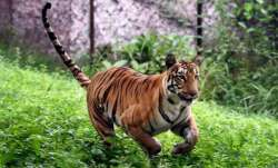 Tadoba Andhari Tiger Reserve (Representational image)