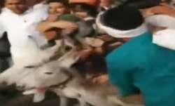 BSP partymen paraded on donkeys, faces blackened in Jaipur