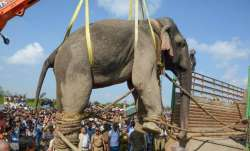 Assam's rogue elephant 'Laden' dies after six days in captivity