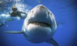 Great white shark bites off man's leg at a popular beach in Australia, dies