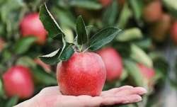 Man places online order for apples, finds iPhone inside