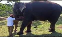 covid19, elephants, covid test, Mudumalai camp, Mudumalai Tiger Reserve, tamil nadu, elephants teste