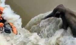odisha, rains, elephant rescue mission, OTV journalist dead,
