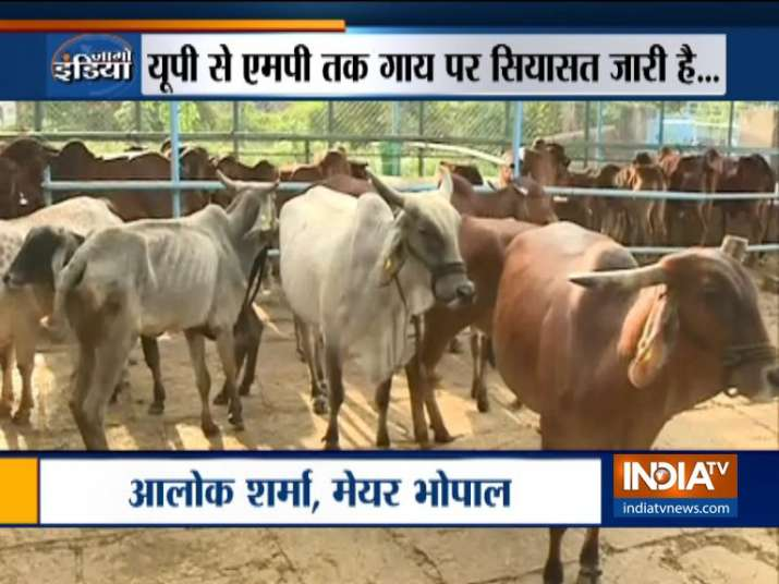 Yogi Adityanath govt to impose additional cess for cow welfare