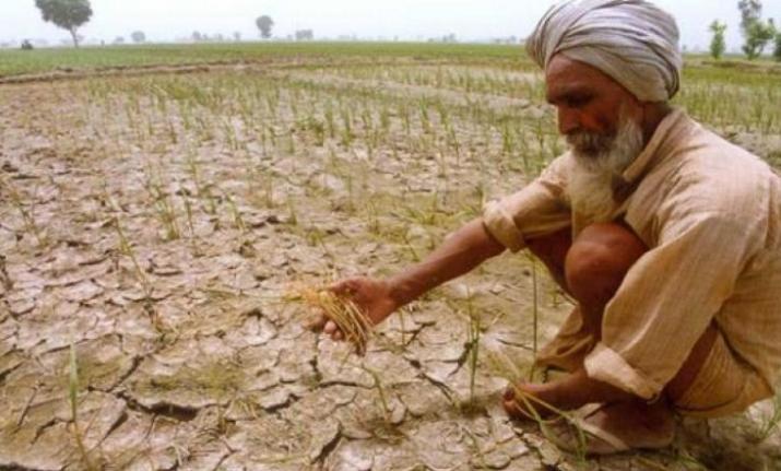 Representational image of farms in Madhya Pradesh