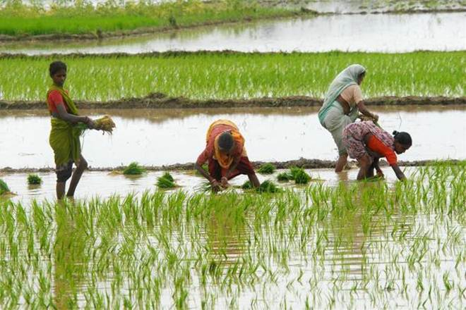 Crop production decreases in Gujarat, hints socio-economic