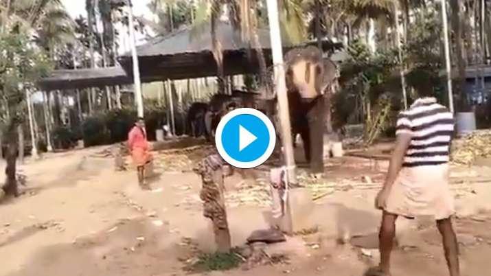 batting elephant